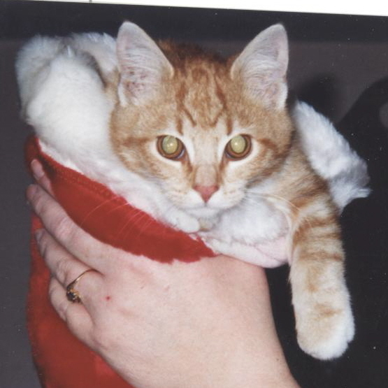 Amber-Christmas 2005