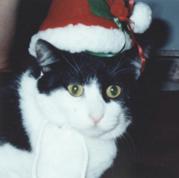 Felix-Christmas 2004