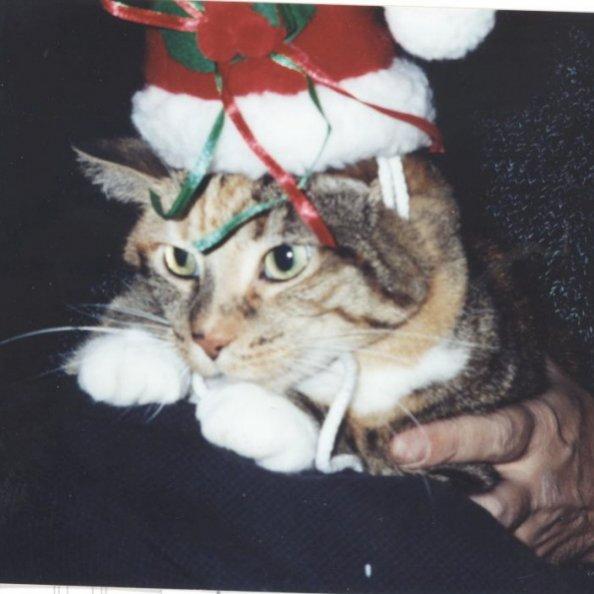 Kallie-Christmas 2002