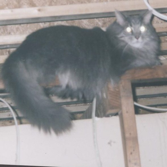 Montague exploring the ceiling, 2003