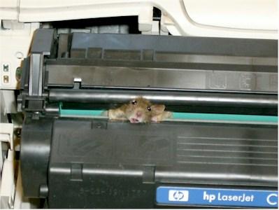 printer jam