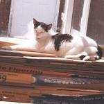 Amy 2003-In her favorite sunny spot.
